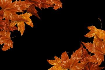 красивые сухие желтые осенние листья на черном фоне