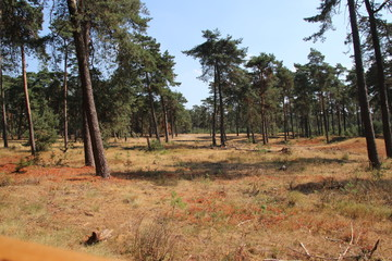 Brown forest due to the dryness in the Netherlands during the summer of 2018