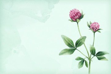 Watercolor illustration of a clover flower