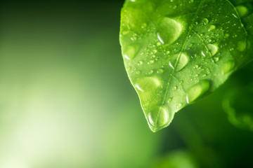 water drops on green leaf Wall mural