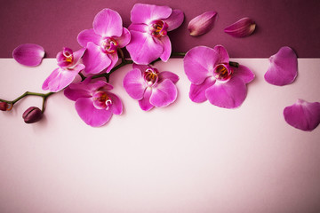 the beautiful orchid flowers