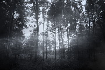 dark woods background, mist and trees in scary halloween landscape