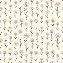 Illustrations of camomile flowers. Seamless pattern