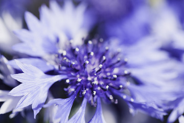 Abstract Flower Closeup