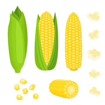 Bright vector collection of colorful yellow corn isolated on white