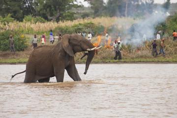 Elephant tries to escape community