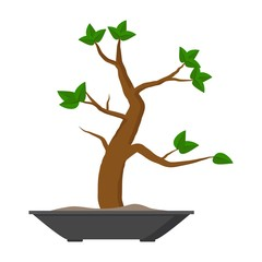 Bonsai decorative small tree growing in container. Japanese tree isolated on white background. Vector iilustration