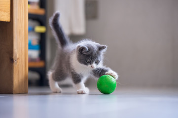The kitten is playing with a ball Fototapete
