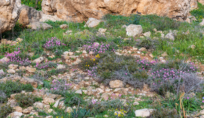 Carpet of colorful flowers, thorns and herbs in the mountains