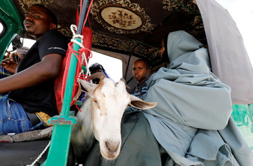 A goat is seen inside a rickshaw taxi from a livestock market where people buy sacrificial animals ahead of the Eid al-Adha celebrations in Mogadishu