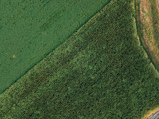 Aerial photography of cutivated soybean and corn crop field