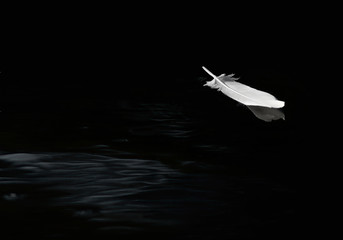 Egret feather floating on calm water in black and white.