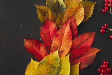 Autumn seasonal background, colourful ash leaves