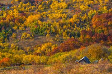 Autumn landscape, colorful forest
