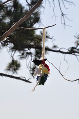Devil's Tower National Monument, Wyoming, Black Hills - Sacred Spirit Dolls. Hang from a Pine Tree