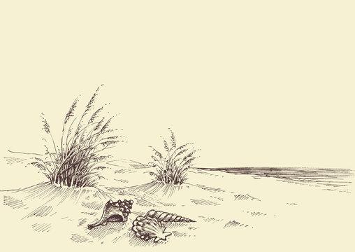 Empty beach, sea shells in the sand