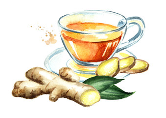 Ginger tea, Ginger root, concept of healthy drink. Watercolor hand drawn illustration, isolated on white background