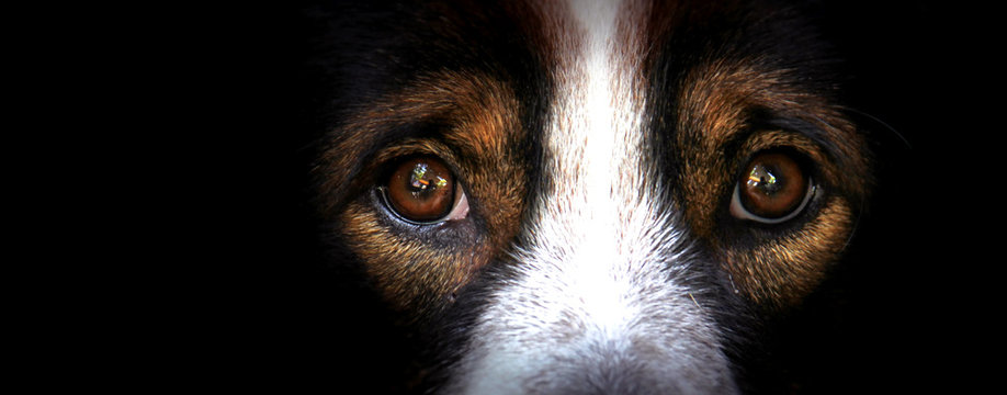 The eyes of dogs, emotions and feelings.