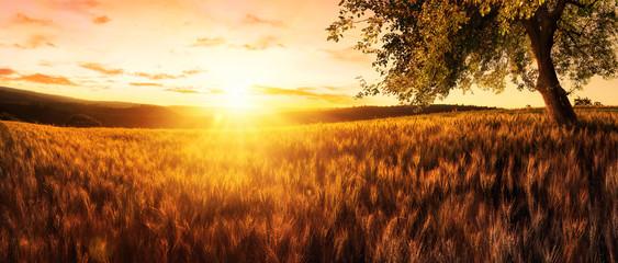 Fotorolgordijn Bruin Sonnenuntergang auf einem goldenen Weizenfeld
