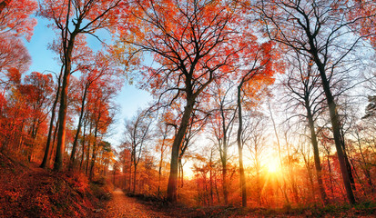Wall Mural - Autumn scenery with red foliage and blue sky