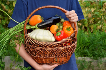 Woman is holding the freshly picked harvest of vegetables in a wicker basket in the garden