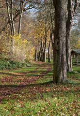 Weg durch den herbstlichen Wald