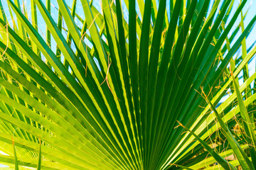 Palm tree leaf, sunlight and beautiful sky landscape. Travel, Tourism, vacation concept, Tropical  background. Closeup for the adorable background and pattern..