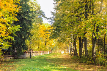 Autumn landscape with path and fence that goes deep into the forest