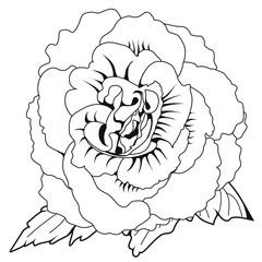 Begonia x tuberhybrida blossoms. Coloring book. Stock illustration. Isolated image on white background. Symbol of North Korea.