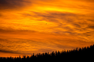 Epic fiery sunset above the tree line 3