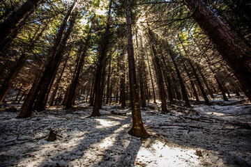 Wide angle of a Forest in Queenstown New Zealand in the snow