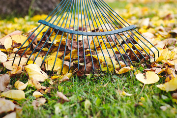 Rake with fallen leaves at autumn