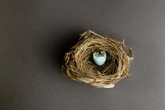 Nest with blue hatched egg.