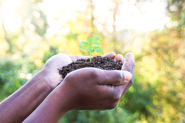 Plant in soil held in Hands, Ecology concept and Nature Background