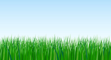 vector illustration of green grass on sky background