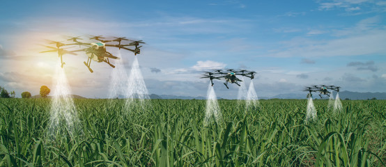 iot smart agriculture industry 4.0 concept, drone (in precision farm) use for spray a water, fertilizer or chemical to the field, farm for growth a yields,crops, use for control, kill the bug or weed Wall mural