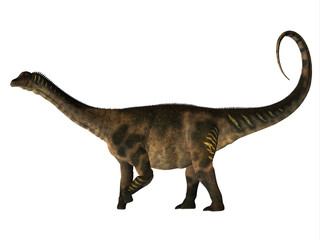 Antarctosaurus Dinosaur Side Profile - Antarctosaurus was a herbivorous sauropod dinosaur that lived in the Cretaceous Period of South America.