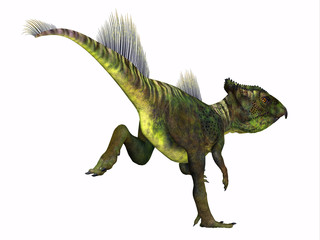 Archaeoceratops Dinosaur Tail - Archaeoceratops was a Ceratopsian herbivorous dinosaur that lived in China in the Cretaceous Period.