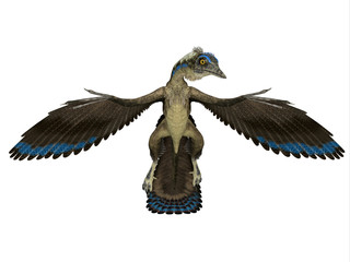 Archaeopteryx Reptile Front - Archaeopteryx was a carnivorous Pterosaur reptile that lived in Germany during the Jurassic Period.