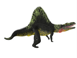 Arizonasaurus Dinosaur Tail - Arizonasaurus was a carnivorous theropod dinosaur that lived in Arizona during the Triassic Period.