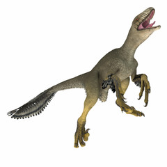 Dakotaraptor Dinosaur on White - Dakotaraptor was a carnivorous dromaeosaurid theropod dinosaur that lived in South Dakota, North America during the Cretaceous Period.