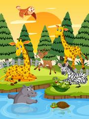 Wild animals at sunset