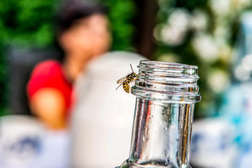 close up of Wasp on empty bottle. Drinking theme. Insect in summer