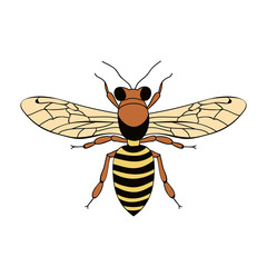 isolated, insect bee