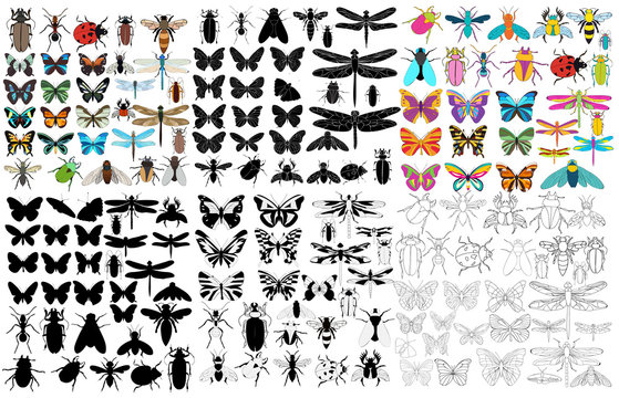 vector, isolated, insect, set, beetles, bee, ant, butterfly