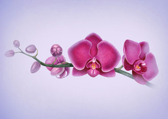 Watercolor illustration of orchids. Perfect for greeting cards