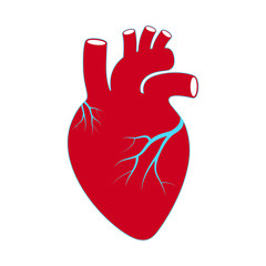 Sign heart. Human organ symbol heart. Isolated icon heart on white background. Vector illustration