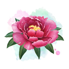 A watercolor illustration of the peony flower. Perfect for greeting cards