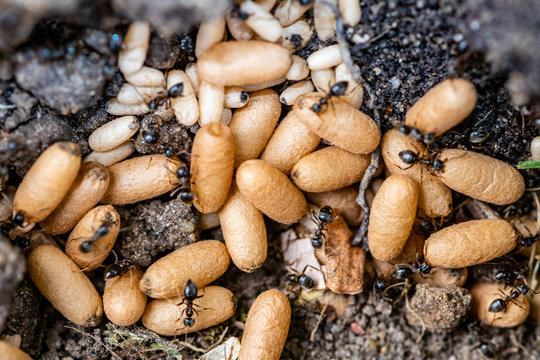 ants larvae and eggs underground
