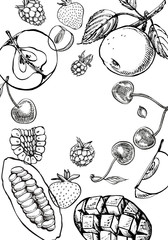 Template background of graphic botanical illustration. Mango Fruit, Cacao and Berries strawberry, raspberry, apple, cherry isolated on white background.